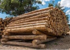 木材加工行业消费需求扩大  催生木材下游产业市场另一大发展趋势高频板